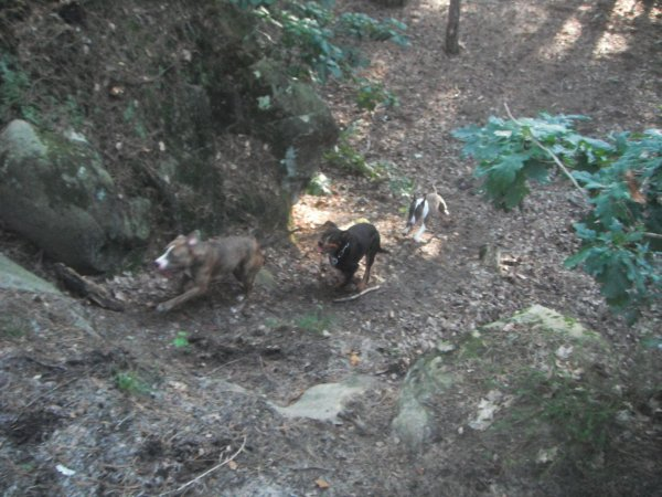 Une super sorte en forêt avec Tysa notre coupine :)