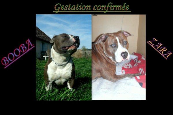 Gestation confirmée :)