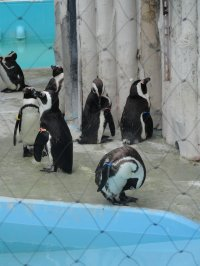 29 Mai: Zoo d'Ueno, quartier Akihabara et Maid Cafe !!