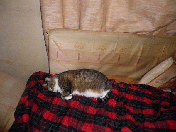 déjà 23 semaine que tu es partie mémère - Hommage as mémère une de mais chatte décède