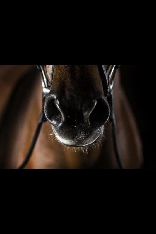 Seulement les vrais cavaliers savent que l'équitation est un sport!