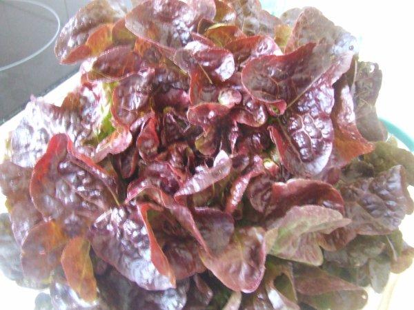 fraise  ma petite africaine et salade