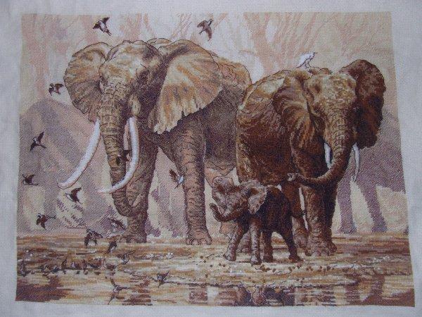 Elephant suite et fin