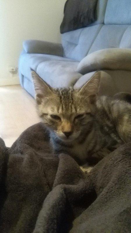 Nouveau petit chaton : Kiwi