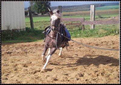 Pour aprendre une chose a son poney , il suffit de lui parlez !