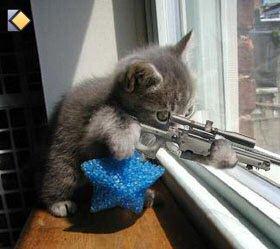 CHat trop marrant!!! (avec sa mitraillette )