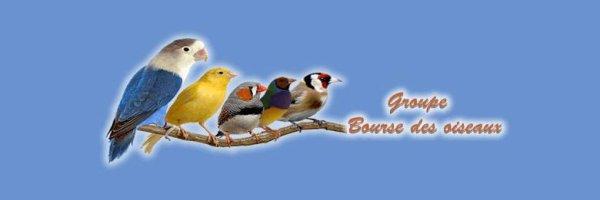 Bourse des oiseaux