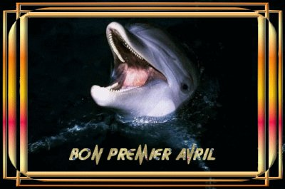 nos les amis les dauphins