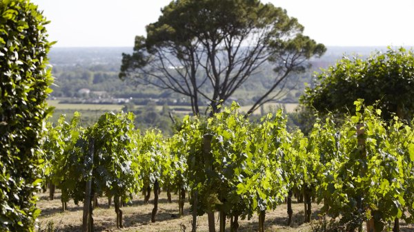 Petite escale dans les vignes