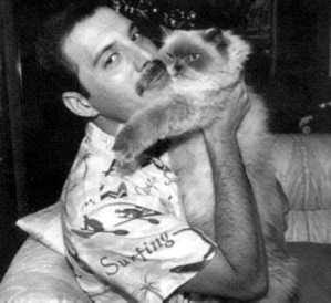 Freddie Mercury et son chat