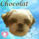 Photo de mon-chien-chocolat