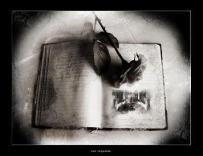 Le Livre Se Ferme Mai Lamitier Y Reste Amour Et Amitie
