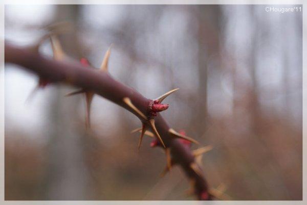 Petite virée en forêt...