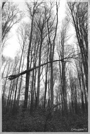 Petite virée en forêt... fin