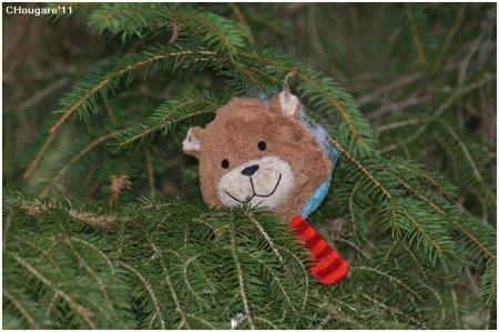 Etang de la Gruère -> J'ai vu un ours!!