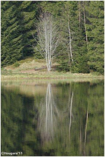 Etang de la Gruère -> Reflets