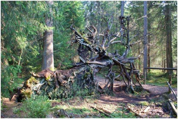 Etang de la Gruère -> Des bois