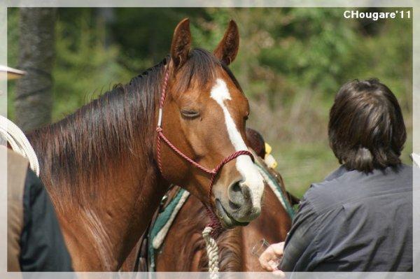 A La Déchetterie -> Horses
