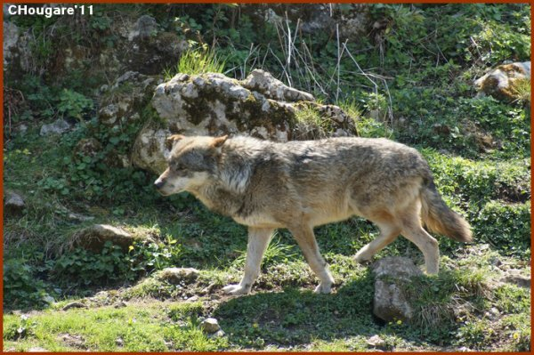 Mont d'Orzeires -> Loups