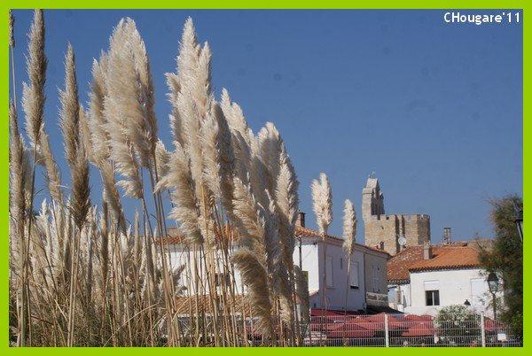 Camargue 2011 -> L'Eglise et les marais