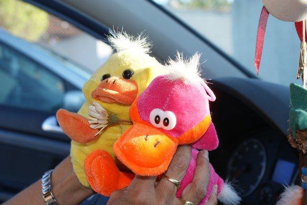Canard en Camargue -> Les copains d'abord!