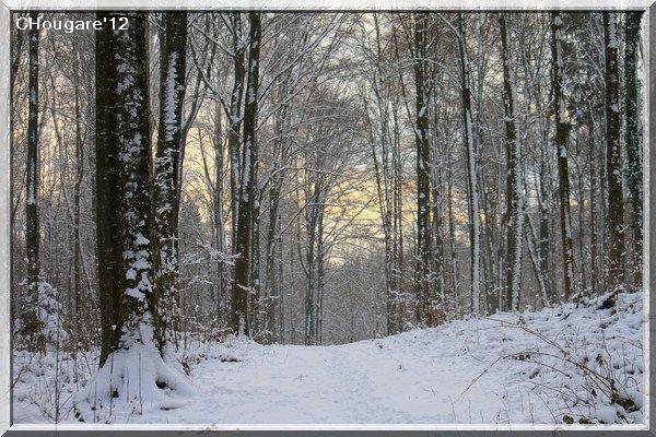 Petit bol d'air en forêt
