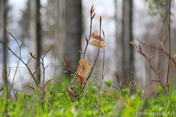 Petit bol d'air en forêt...