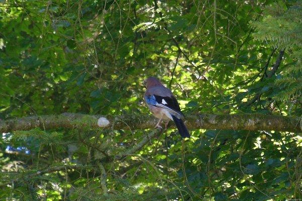 Escapade dans les bois de Benenté