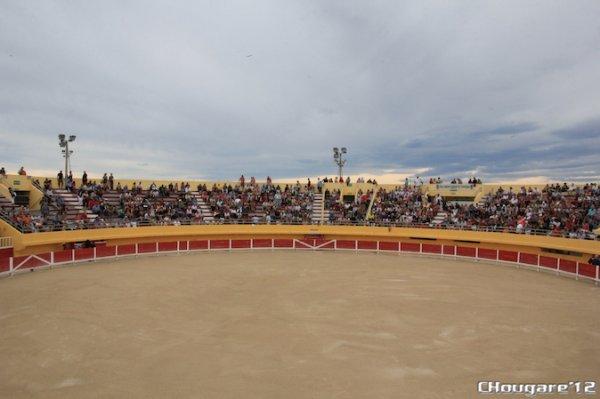 CAMARGUE - La course de Tau