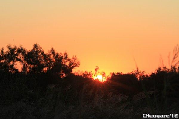 CAMARGUE - A l'aube