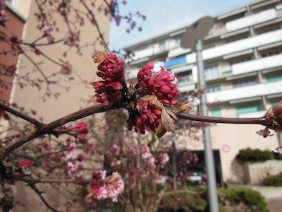 Un jour de printemps...