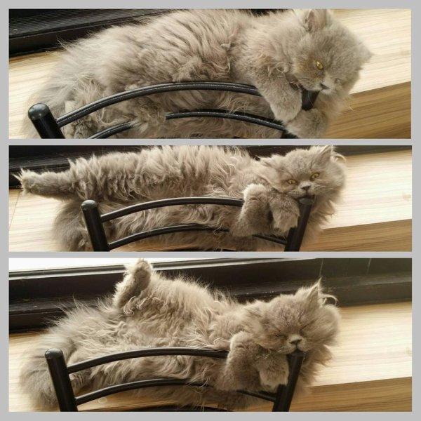 Sweetie ,my cat.