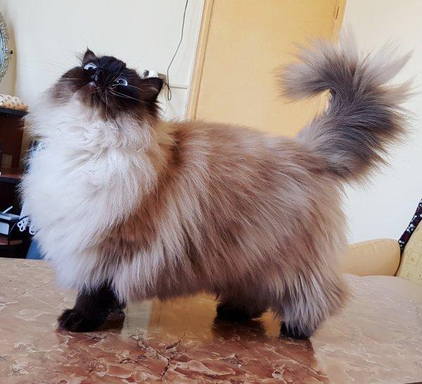 Lucio my cat