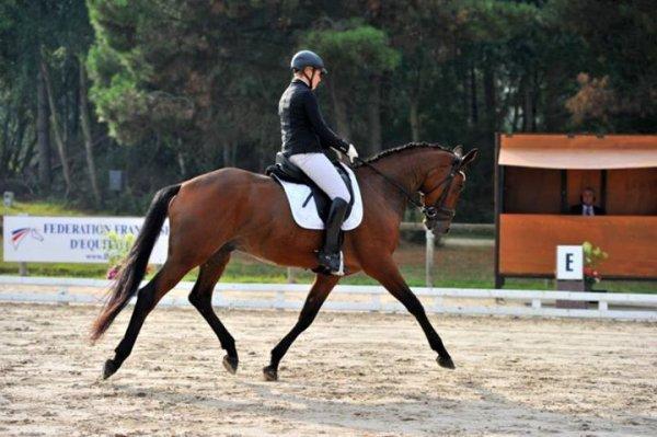 Saumur 2013 : le champion des 4 ans est Trakehner!