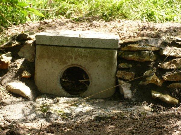Camouflage des nids des canes