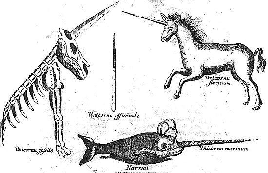 le narval   licorne oc u00e9anique ou l u00e9gende de corsaire