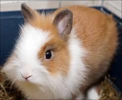 Parce que sans lui ma passion pour les lapins n'existerait pas.