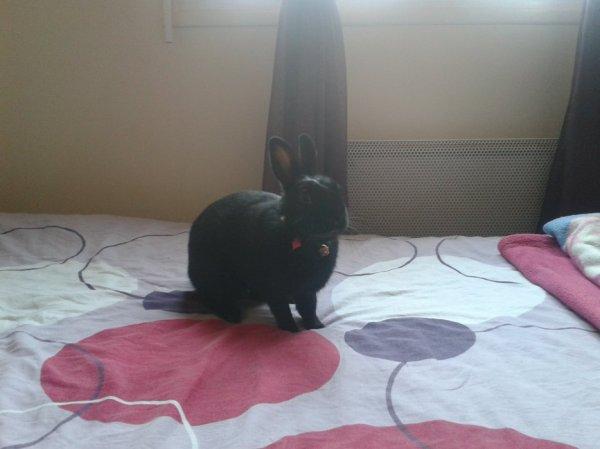 Concours photo spécial lapins !! :)