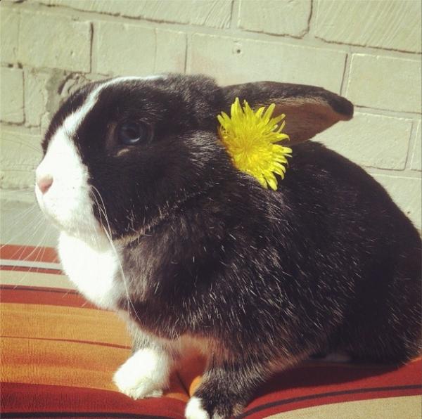 Concours- photos spécial lapins !! 2