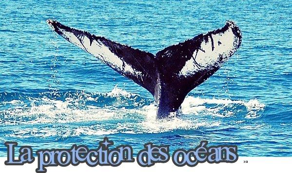 Article II La protection des Océans