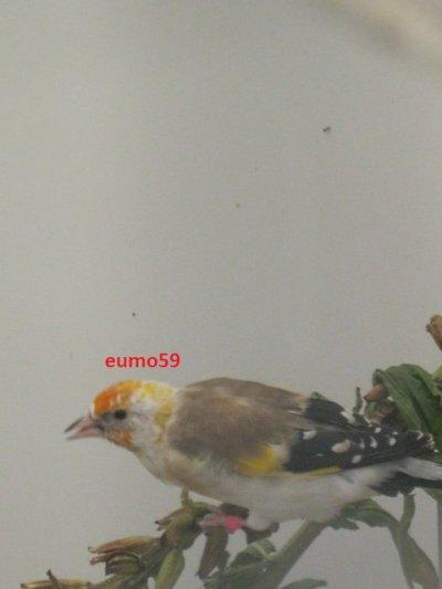 eumo59