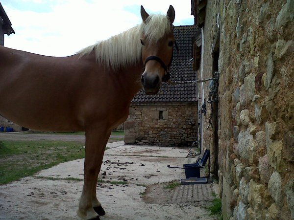 """"""" Pour parler à un cheval, il n'y a pas besoin de mots. C'est une étreinte charnelle qui alimente nos rêves. """""""