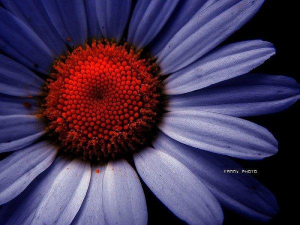 Fleur de   la  nuit ... 夜の花