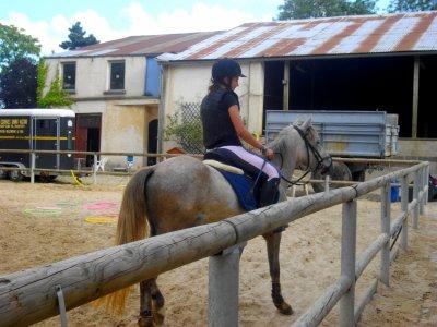 Un poney en Or