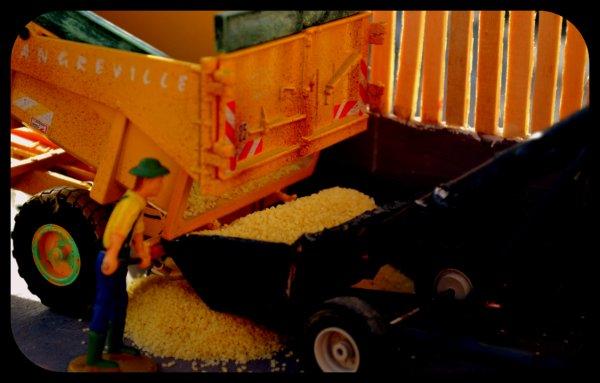 Mais Grain 2014