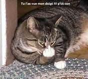 fais pas chier ton chat , c'est un conseil