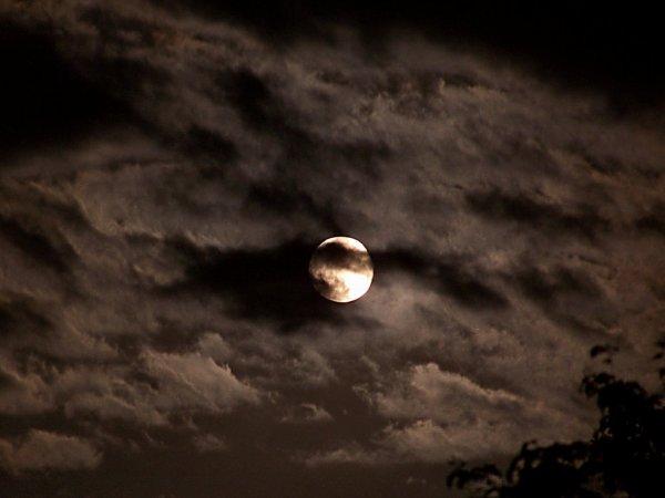 Chapitre 1 : Pleine Lune