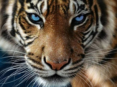 Annah-Lise littéraire ; Le Tigre de William Blake #1
