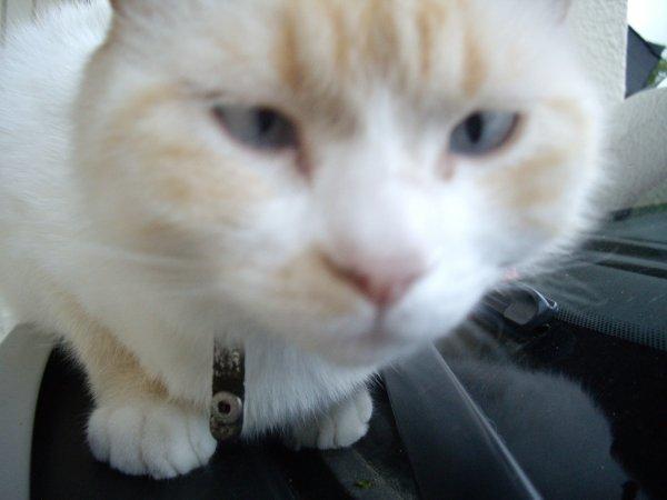 Mon chat adorééééééé