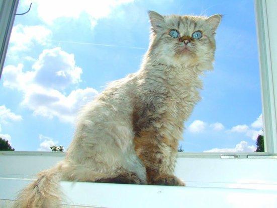 Mon chat c'est envolé pour un monde meilleur,celui du paradis des Animaux, repoze en Paix mon bébé :( <3